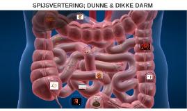 SPIJSVERTERING; DUNNE & DIKKE DARM