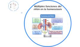 El sistema urinario: fisiología renal