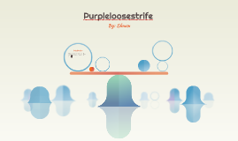 Purpleloosestrife