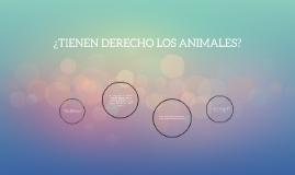 ¿tienen derecho los animales?