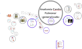 Copy of Anatomia Cardio Pulmonar