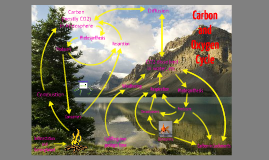 Biology Cycles