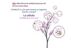 """Organización de los seres vivos: La célula """"unidad estructural"""""""