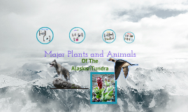 Alaskan Tundra Plants and Animals