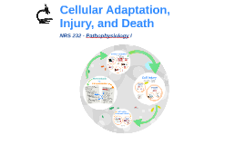 Cellular Adaptation, Injury, and Death
