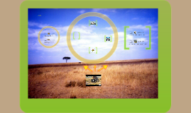 Copy of Food Web (the savanna ecosystem)