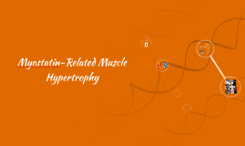Myostatin-Related Muscle Hypertrophy