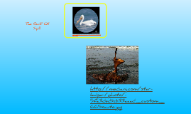 Causes and Effects of the Gulf Oil Spill