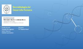 Neurobiologia del Desarrollo Humano