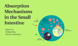 Aborption Mechanisms in the Small Intestine