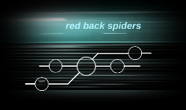 red back spiders
