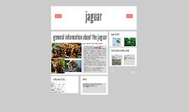 Copy of jaguar