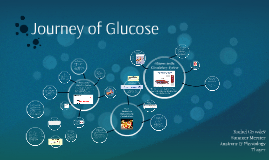 Copy of Journey of Glucose