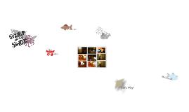 Cinekid - Ontwerppresentatie