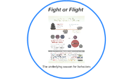 Copy of Fight or Flight