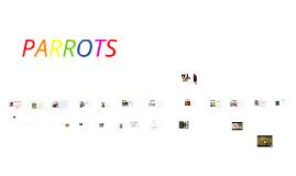 Copy of Parrots