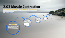 2.03 Muscle Contraction