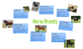 Horse Breeds!
