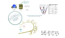 Copy of fases de la materia
