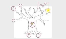 L'arbre des objectifs