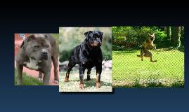 top 10 dangerous dogs