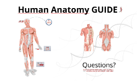 Copy of Reusable EDU Design: Human Anatomy Guide