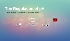 The Regulation of pH in the Blood