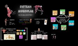 Sistema Muscular OK