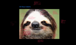 Copy of All About Sloths