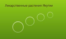 Лекарственные растения Якутии