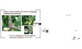 plagas y enfermedades del jitomate.