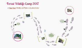forest wildlife camp 2017