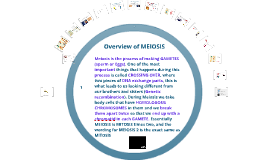 MEiosis: Making germ cells or Sperm and Eggs