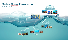 Copy of Marine Biome Presentation