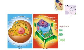http://www.sobiologia.com.br/figuras/Citologia/membranaplasm