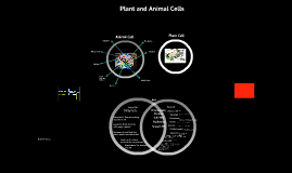 Copy of Animal Cells