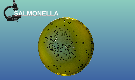 Copy of SALMONELLA