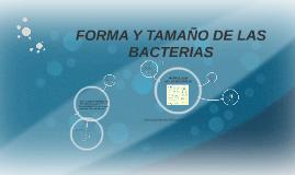 FORMA Y TAMAÑO DE LAS BACTERIAS