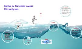 Copy of Cultivo de Protozoos y Algas Microscópicas.