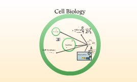 Cellular processes for AS, A2 and IB (SL and HL)