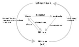 Recycling Nitrogen