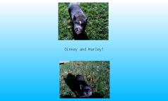 Oinkey and Harley
