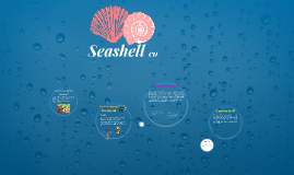 Copy of Seashell co