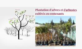 Plantation d'arbres et d'arbustes en contenants