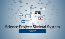 Science Project: Skeletal System
