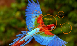 ANIMALES EN PELIGRO DE EXTINCION EN COLOMBIA
