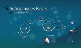 Actinomyces Bovis