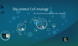 The Animal Cell Analogy