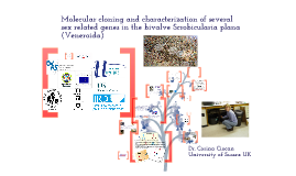 Copy of Copy of Intersex in Scrobicularia plana