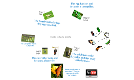 Copy of 2nd Grade Science: The Life Cycle of a Butterfly